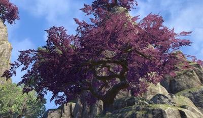 Herbier : la Flore du Couchant Zorabl11