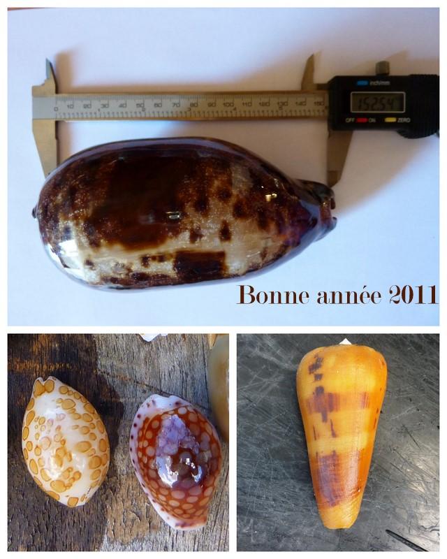 Le début de votre passion pour les coquillages... Coq_ru10