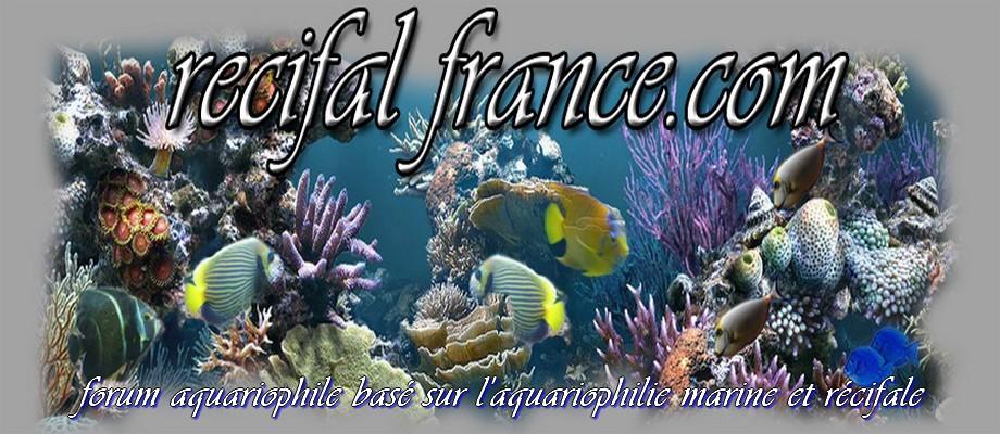 recifal france.com