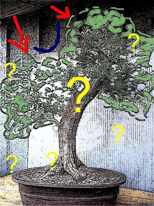 Un biancospino che diventa bonsai...... - Pagina 2 P1050611