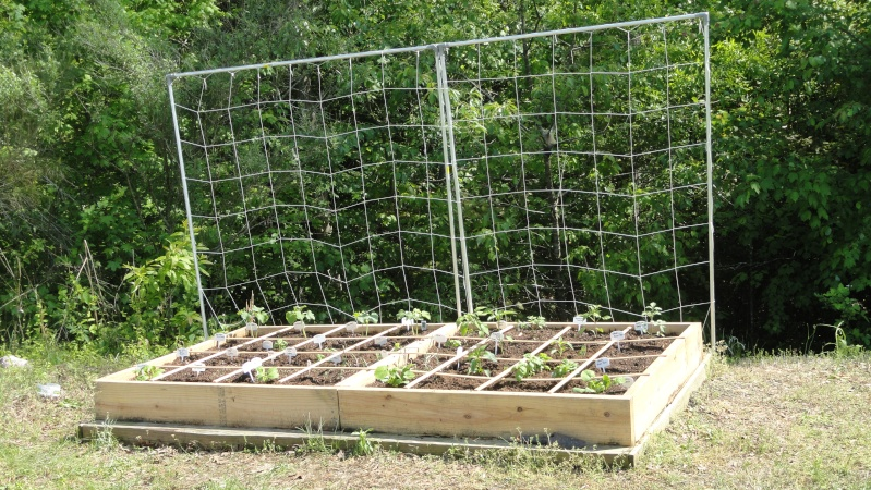 Hey! Mid-south gardeners! In here! 429_af16