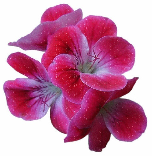 Offrons-nous une fleur ... 5uc7xh10