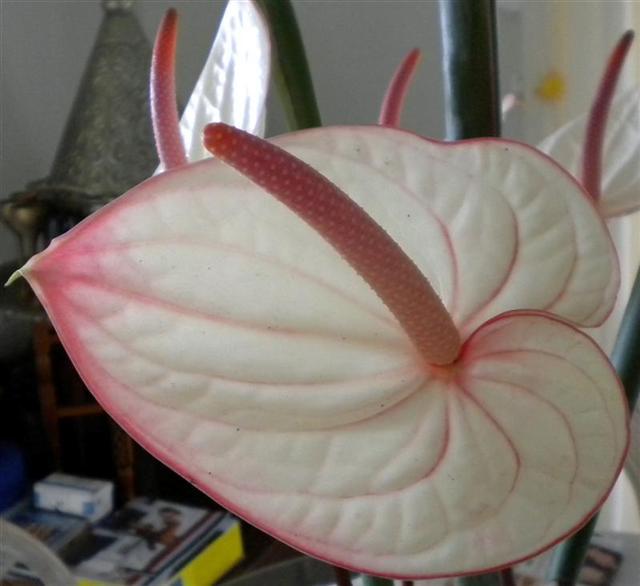 Offrons-nous une fleur ... - Page 2 Dscn1011