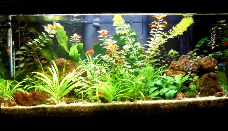 mon aquarium 96 litres - Page 2 15-06-11