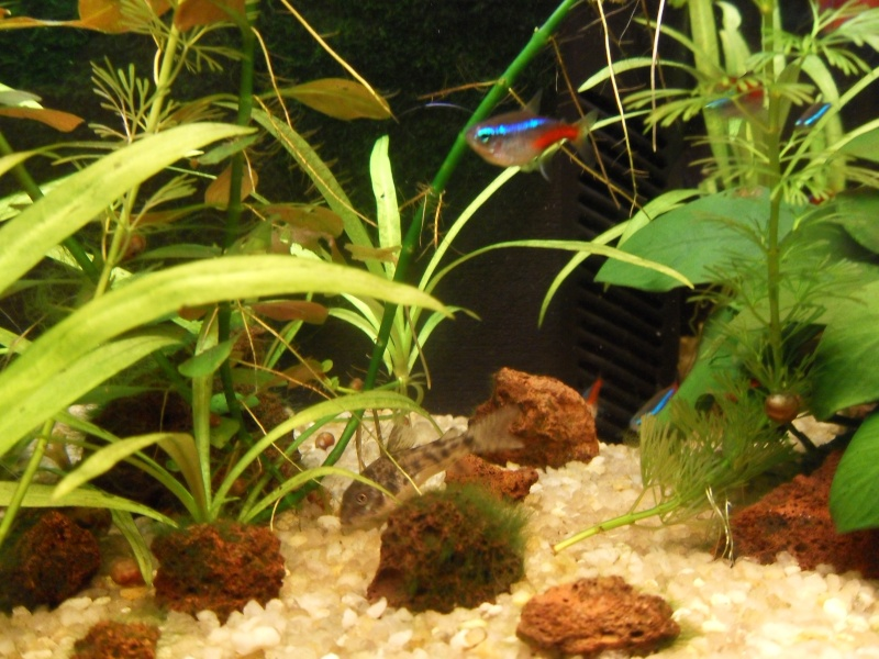 mon aquarium 96 litres Sdc15312