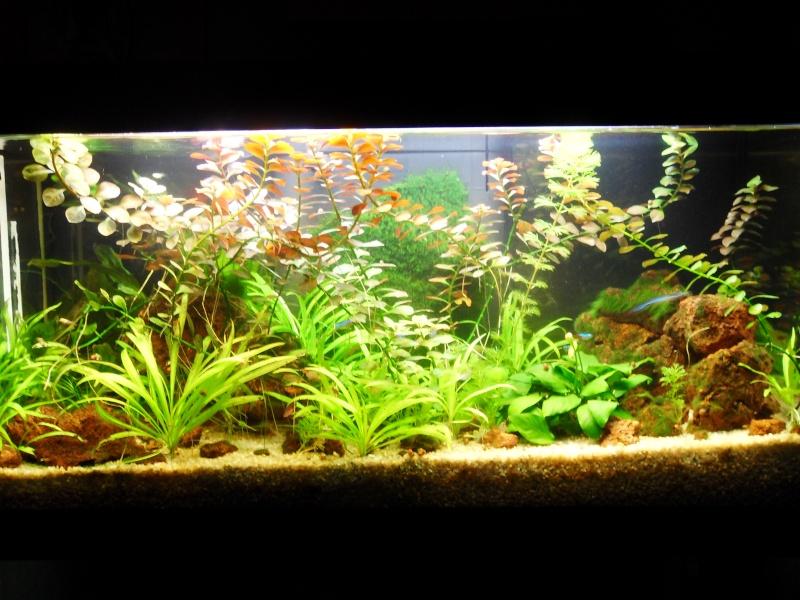 mon aquarium 96 litres Sdc15511