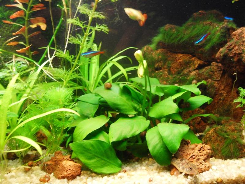 mon aquarium 96 litres Sdc15512