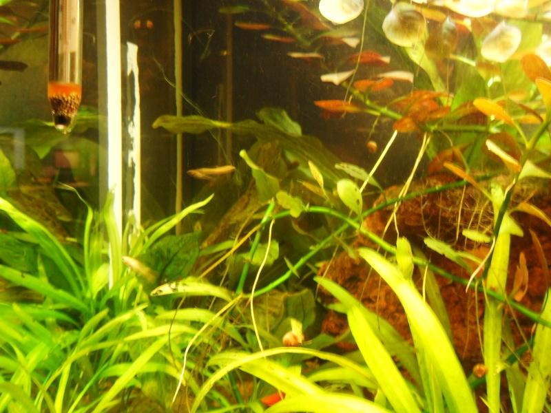 mon aquarium 96 litres Sdc15514