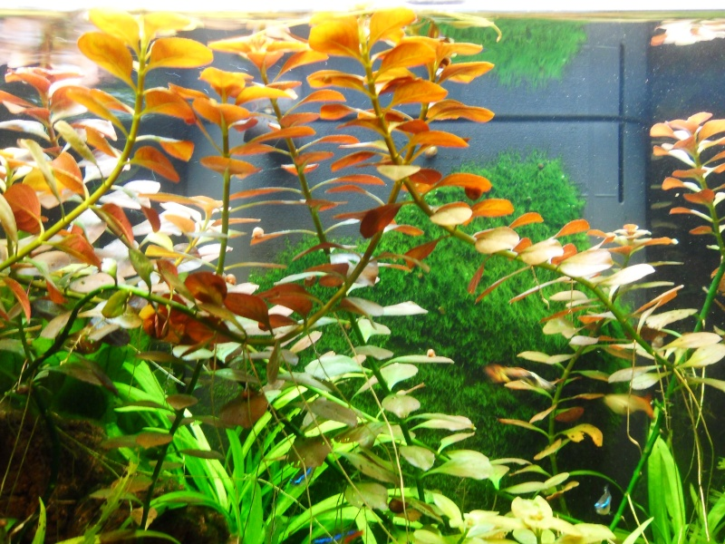 mon aquarium 96 litres Sdc15515