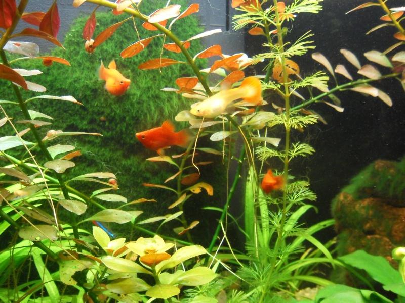 mon aquarium 96 litres Sdc15516
