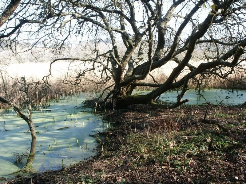 Le marais du Quellen à Trébeurden -7_2710