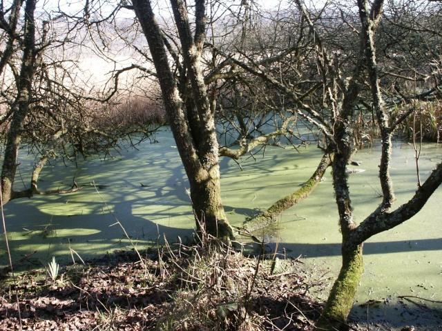 Le marais du Quellen à Trébeurden -7_2810