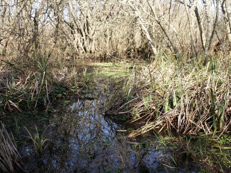 Le marais du Quellen à Trébeurden -7_4110