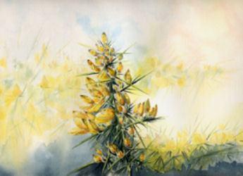Fleurs aquarelles 001_aj10