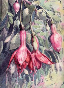 Fleurs aquarelles - Page 2 014_fu10