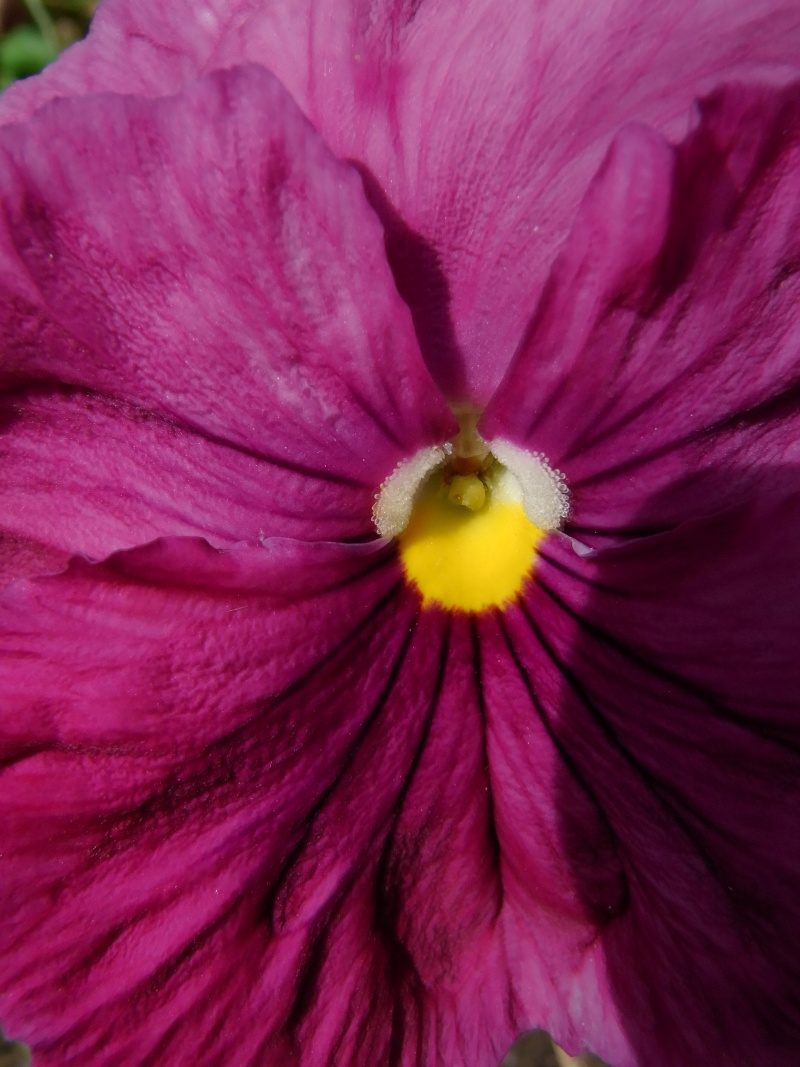 Coeur de fleurs/petites bêtes aussi - Page 3 03010