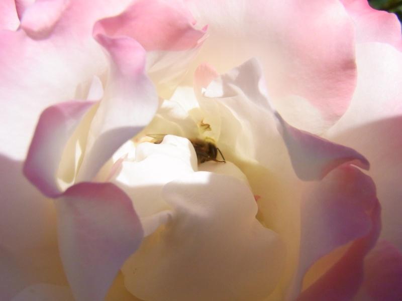 Coeur de fleurs/petites bêtes aussi - Page 4 03311