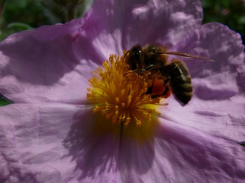 Coeur de fleurs/petites bêtes aussi - Page 3 03711