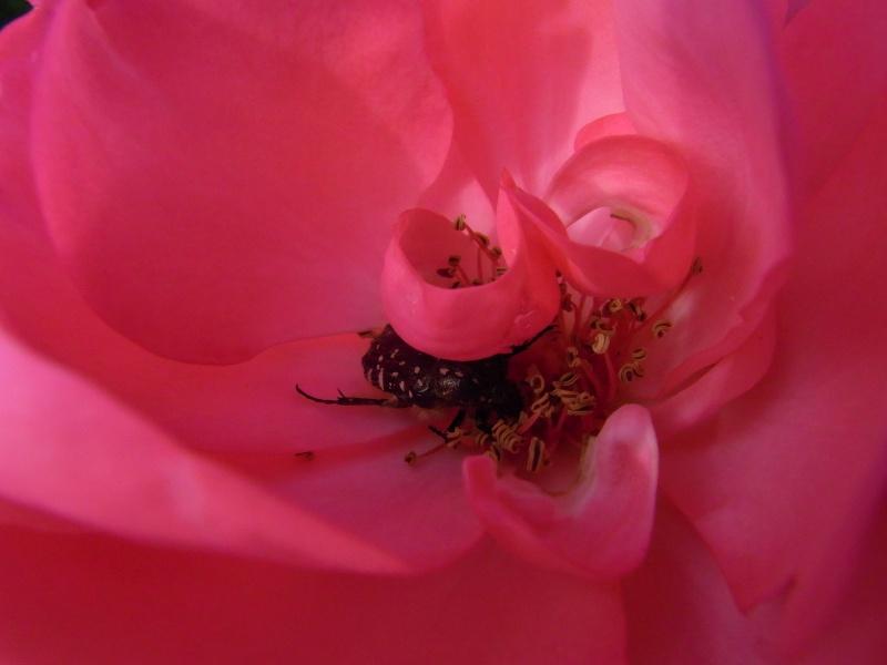 Coeur de fleurs/petites bêtes aussi 05710