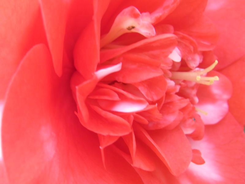 Coeur de fleurs/petites bêtes aussi 06410