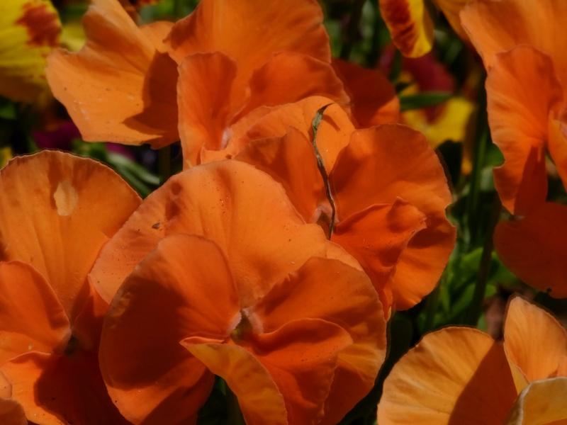 Coeur de fleurs/petites bêtes aussi - Page 3 08810