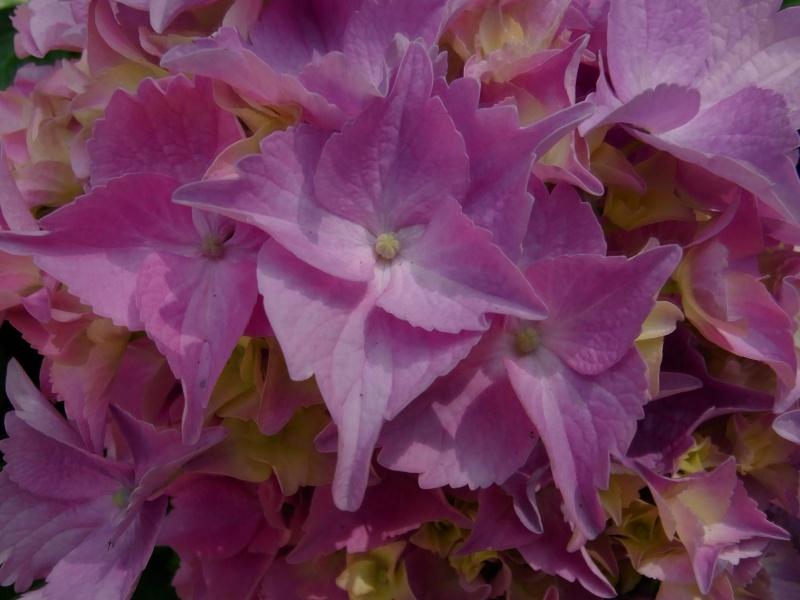 Coeur de fleurs/petites bêtes aussi - Page 3 09110