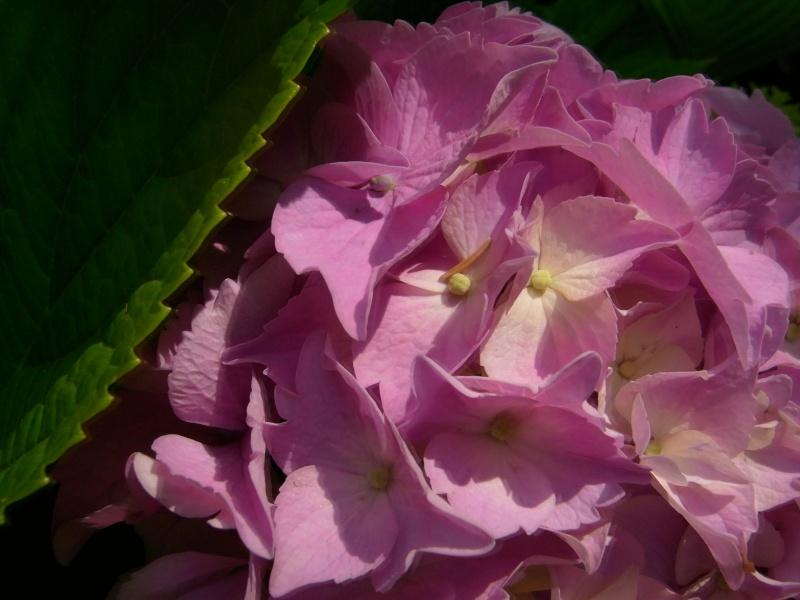Coeur de fleurs/petites bêtes aussi - Page 3 09210