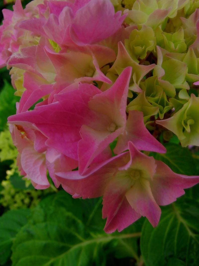 Coeur de fleurs/petites bêtes aussi - Page 3 09310
