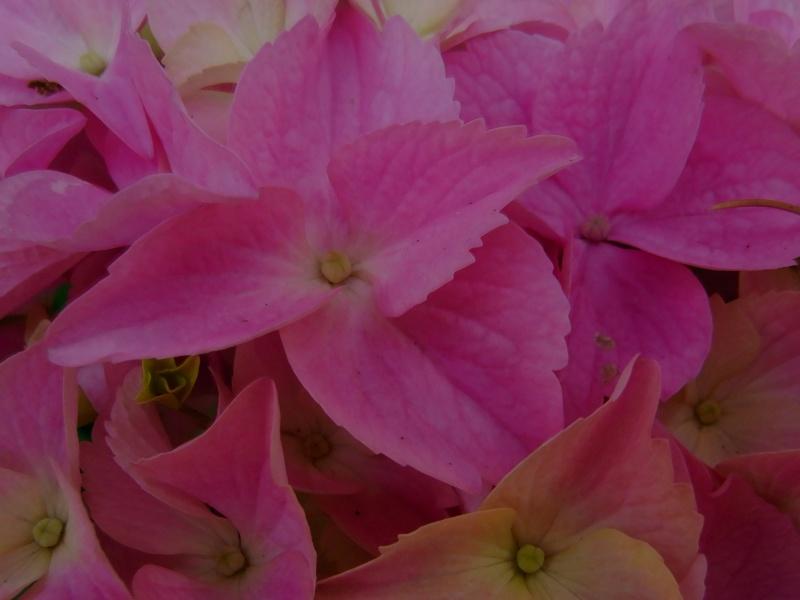 Coeur de fleurs/petites bêtes aussi - Page 3 09510