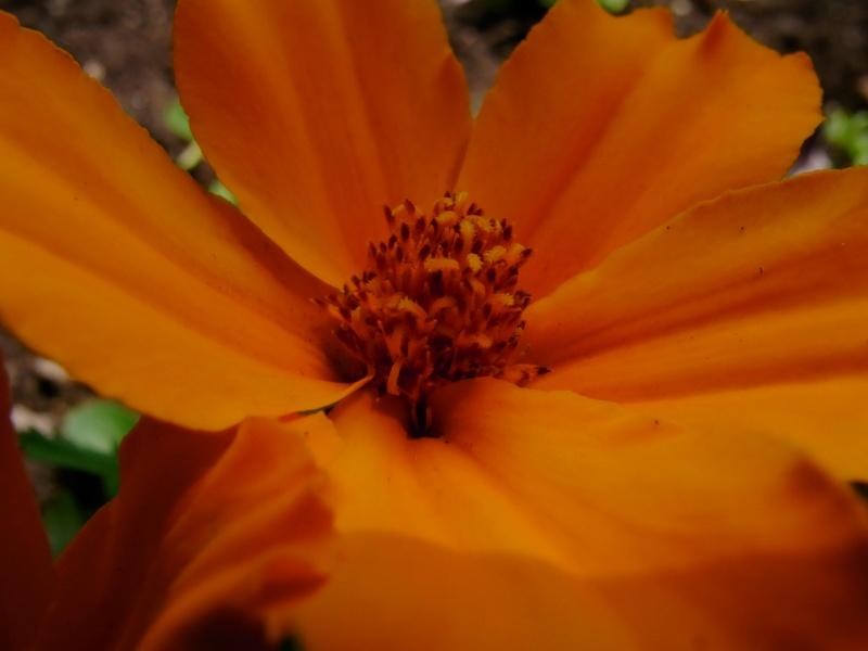 Coeur de fleurs/petites bêtes aussi - Page 3 09810