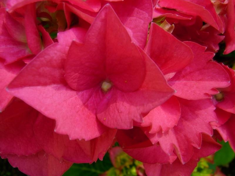 Coeur de fleurs/petites bêtes aussi - Page 3 09910