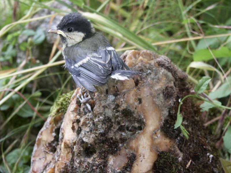 Oiseau dans son nid 10juin12