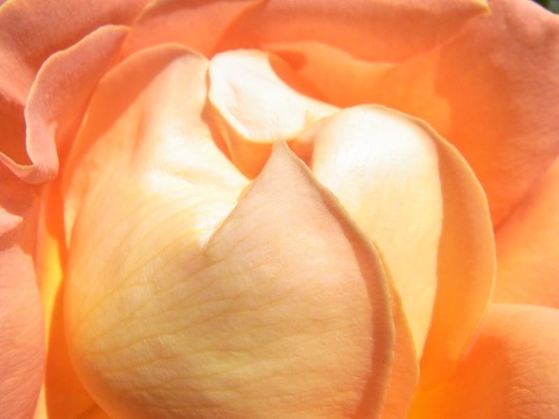 Coeur de fleurs/petites bêtes aussi - Page 4 16210