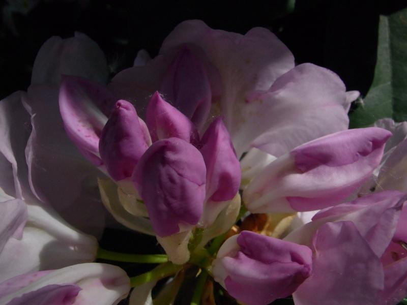 Coeur de fleurs/petites bêtes aussi - Page 3 20410