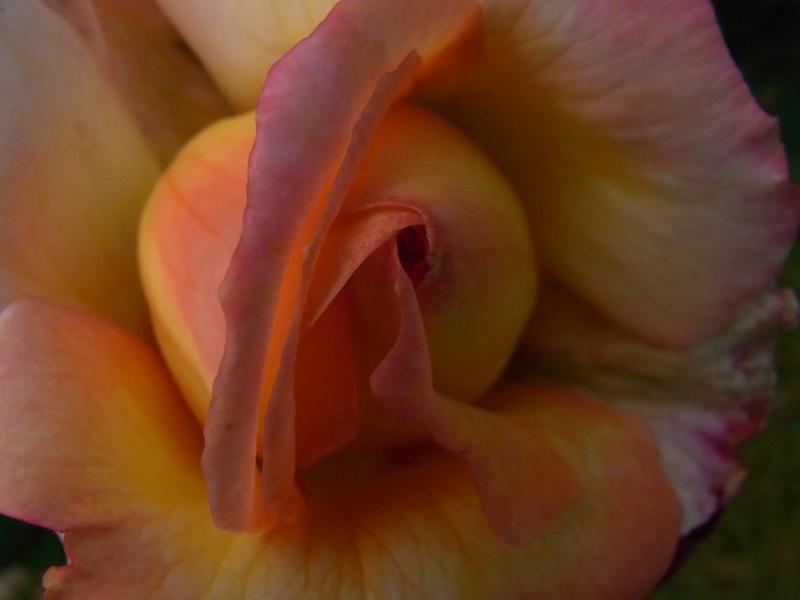 Coeur de fleurs/petites bêtes aussi 30210