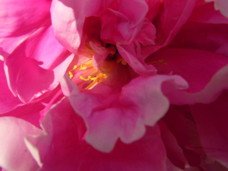 Coeur de fleurs/petites bêtes aussi 37210