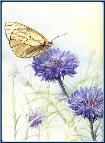 Fleurs aquarelles 3papil11