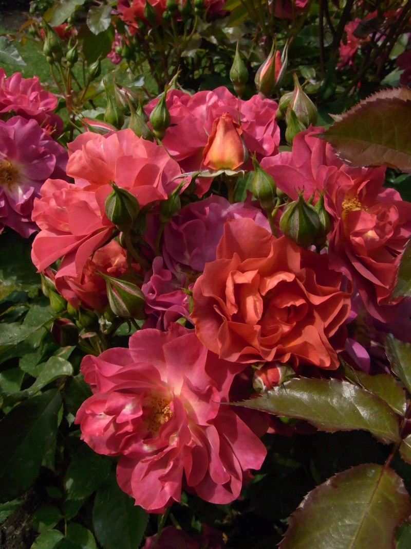 Bouquet naturel que la nature nous offre 42710