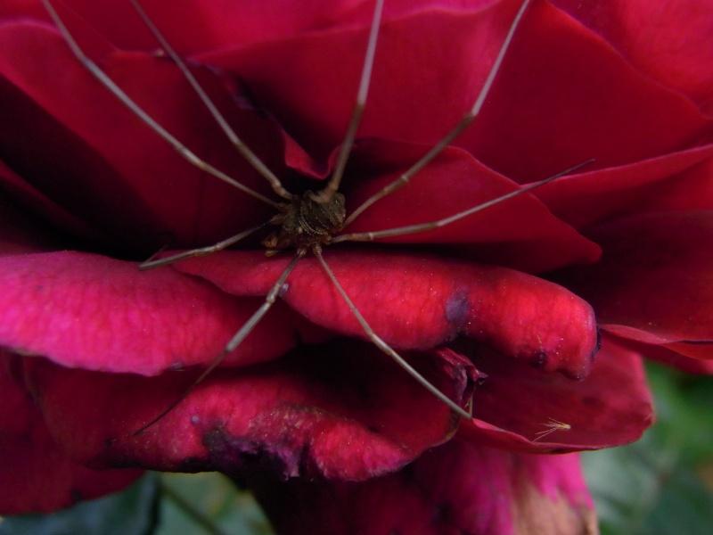 Coeur de fleurs/petites bêtes aussi 58110