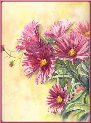 Fleurs aquarelles Asters10