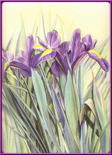 Fleurs aquarelles Iris_d10