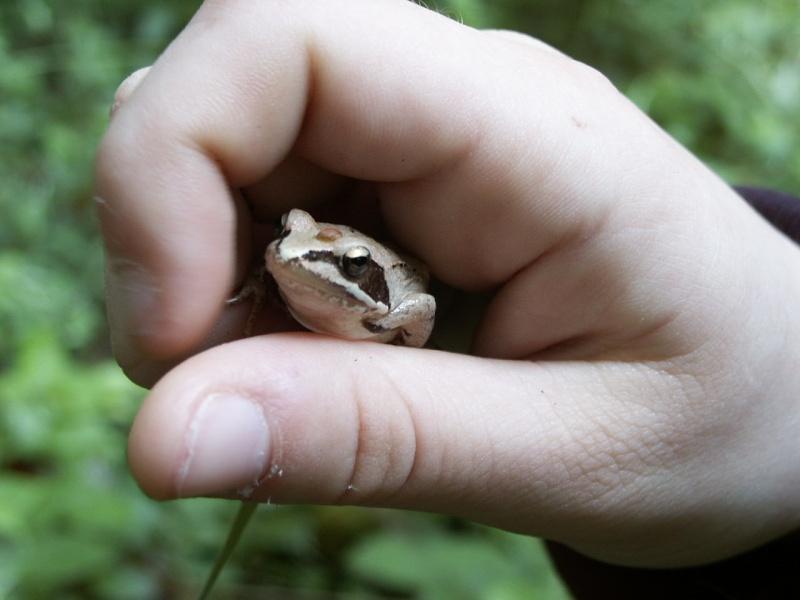 Le chant des grenouilles Pict0012