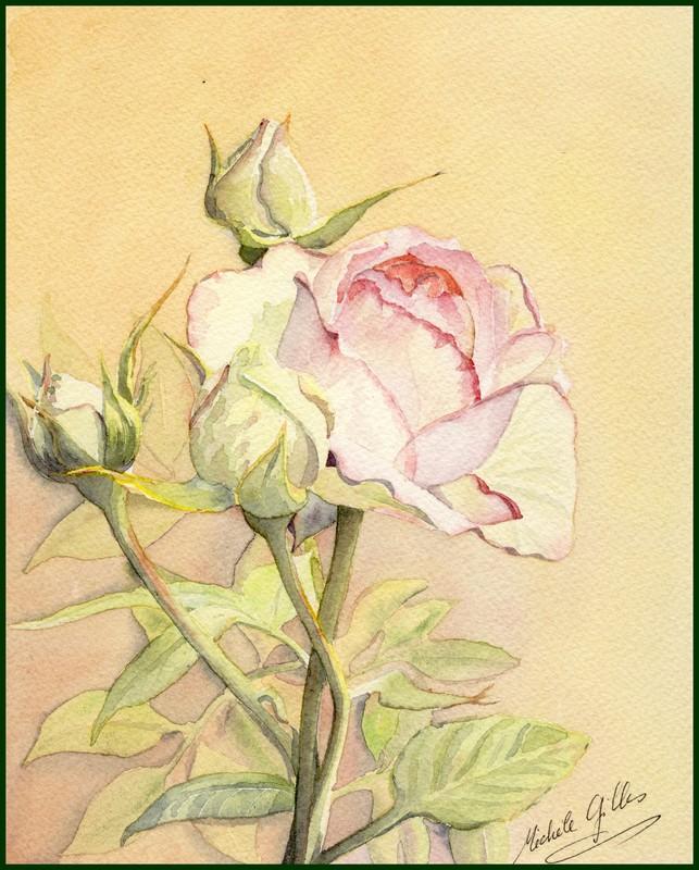 Fleurs aquarelles Rose3a10