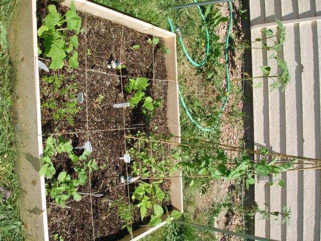 Garden Girl Dsc00323