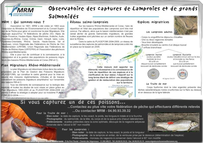Des poissons en danger de disparition : AIDEZ-NOUS A PRESERVER LEURS POPULATIONS ! Plaque10