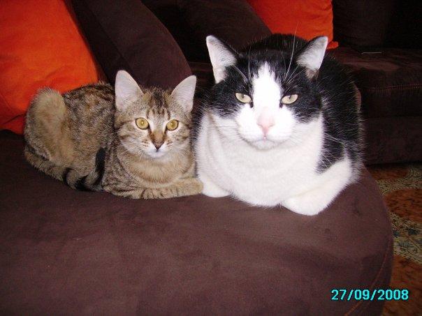mes 2 chats  WESH et DOLA N1534811