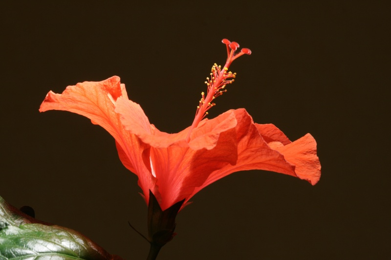 Hibiscus - Page 2 Img_7711