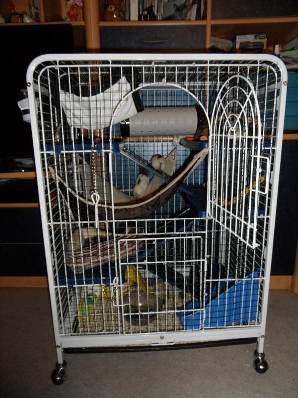Photos de vos cages - Page 5 Sam_0610