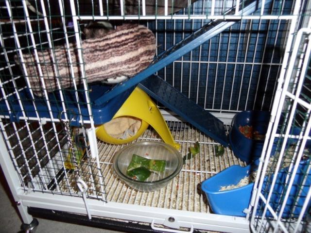 Photos de vos cages - Page 5 Sam_0612