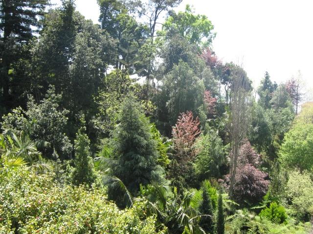Photos de jardins, parcs, forêts... dans le monde Img_0214